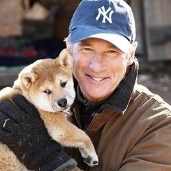 Le Film Hatchi avec Richard Gere, sa vraie histoire et la race du chien